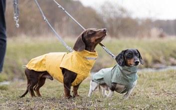 Zwei Dackel mit einem Hunderegenmantel Hamburg DACKEL Saffron und Hunderegenmantel Hamburg DACKEL Thyme Green