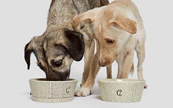 Zwei Hunde fressen aus handgemachtem Hundenapf