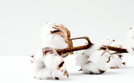 Bio-Baumwolle für Hundebedarf