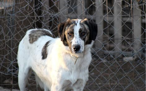 Rescue dog saved from animal protection