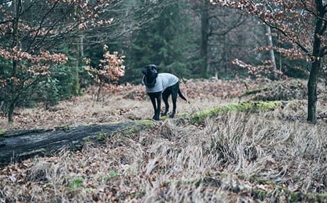 Schwarzer Hund im Wintermantel posiert für Foto