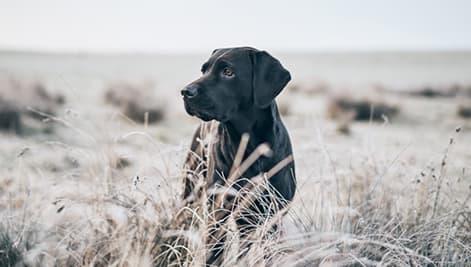 Schwarze Hunde richtig fotografieren