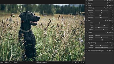 Bildbearbeitung von schwarzen Hunden.
