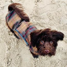 Lucy (Dog Coat Brooklyn Waxed Tartan)