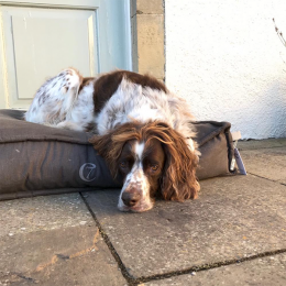 Dougal (Dog Bed Cozy Mocca)
