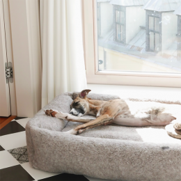 Anda (Hundebett Sleepy Deluxe Teddy)