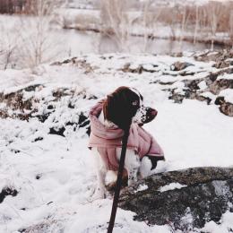 Summer (Dog Coat Alaska Dusty Rosé)