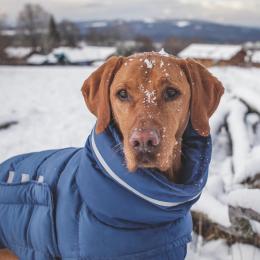 Bill (Dog Coat Alaska Midnight)