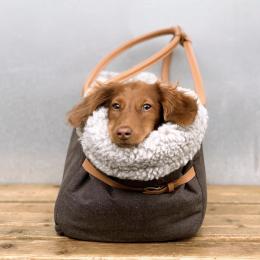 Harold Wedgwood (Dog Carrier Como)