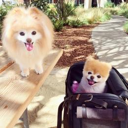 Boo & Bobby (Hundetasche Flight Carrier)