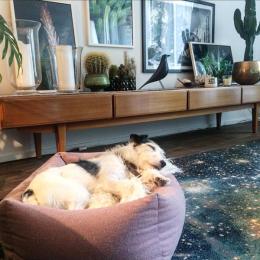 Ernie (Hundebett Sleepy Deluxe)