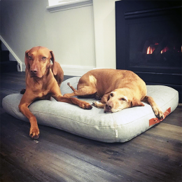Indie & Willow (Dog Bed Dream Heather Grey)