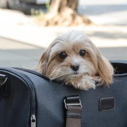 Isabelle (Hundetasche Flight Carrier)