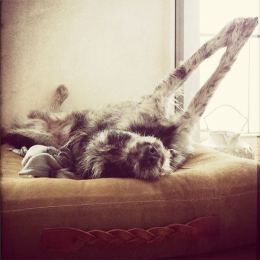 Jona (Hundebett Dream Hazelnut)