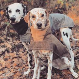 Khaleesi & Django (Hundemantel Brooklyn Grey & Hazel)