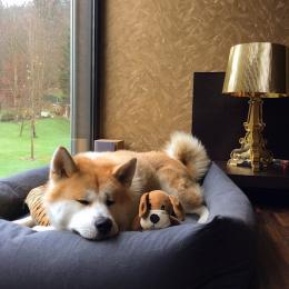 Lexa (Hundebett Sleepy Graphit)