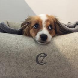 Sammy (Hundebett Little Nap Felt Nature)