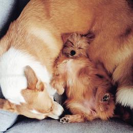 Stella & Misha (Hundebett Sleepy Deluxe Tweed Grey)