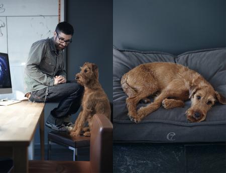 Steve & Finnegan, Finnegan with Dog Bed Cozy