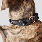 Ridgeback wearing XXL black leather collar with braided details and golden ring