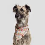 Cloud7 Bandana Hundetuch Hundehalstuch Flower Meadow Hund