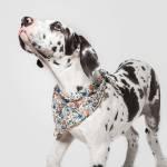 Cloud7 Bandana Cornfield Hund