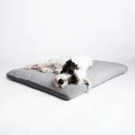 Weißer Terrier mit Flecken liegt auf grauem Hundekissen aus Tweed-Stoff