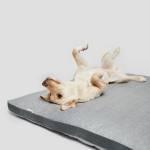 Heller Hund liegt ausgestreckt auf grauem Hundekissen aus Tweed-Stoff