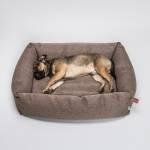 Mittelgroßer Frops Hund mit kurzem Fell liegt in braunem Hundebett mit Umrandung aus Fischgrat-Stoff