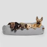 Vier Hunde in einem hellgrauen Hundebett mit Umrandung legen ihren Kopf auf den Rand
