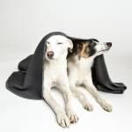 Zwei Hunde unter dunkelgrauer Hundedecke eingekuschelt