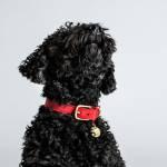 Cloud7 Hunde Halsband Tiergarten Cherry Red Hund