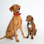 Cloud7 Hunde Halsband Tiergarten Park Green Hunde