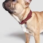 Cloud7 Hunde Halsband Vondelpark Burgund Hund