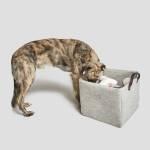 Cloud7 Filz Aufbewahrung Korb mit Hund