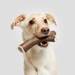 Hund mit cloud7 Hundeknochen