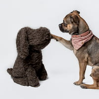 Hund mit Deko Hund