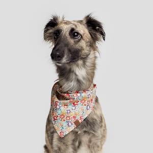Hund-mit-hundehalsband