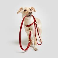 Hund mit Cloud7 Hundeleine aus Leder
