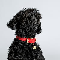 Hund mit Cloud7 Hundehalsband aus Leder