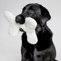 Hund mit Cloud7 Hundespielzeug Stoff Hundeknochen