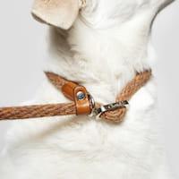 Hund mit Cloud7 Hundeleine Vondelpark