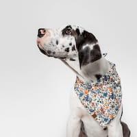 Hund mit Cloud7 Hundehalstuch