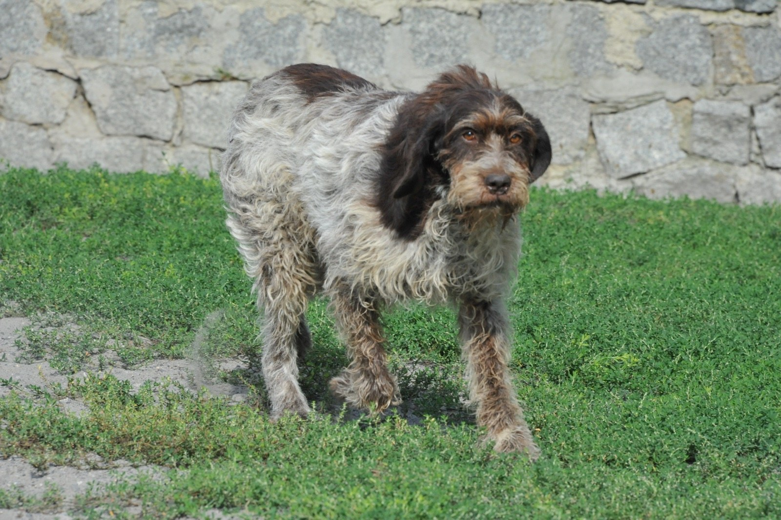 Pro Animale Hund Ada