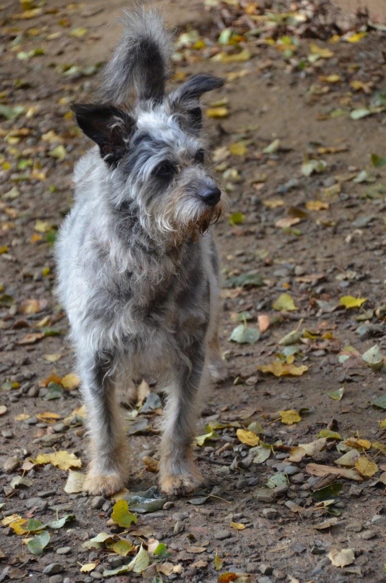 Pro Animale Hund Korzonek