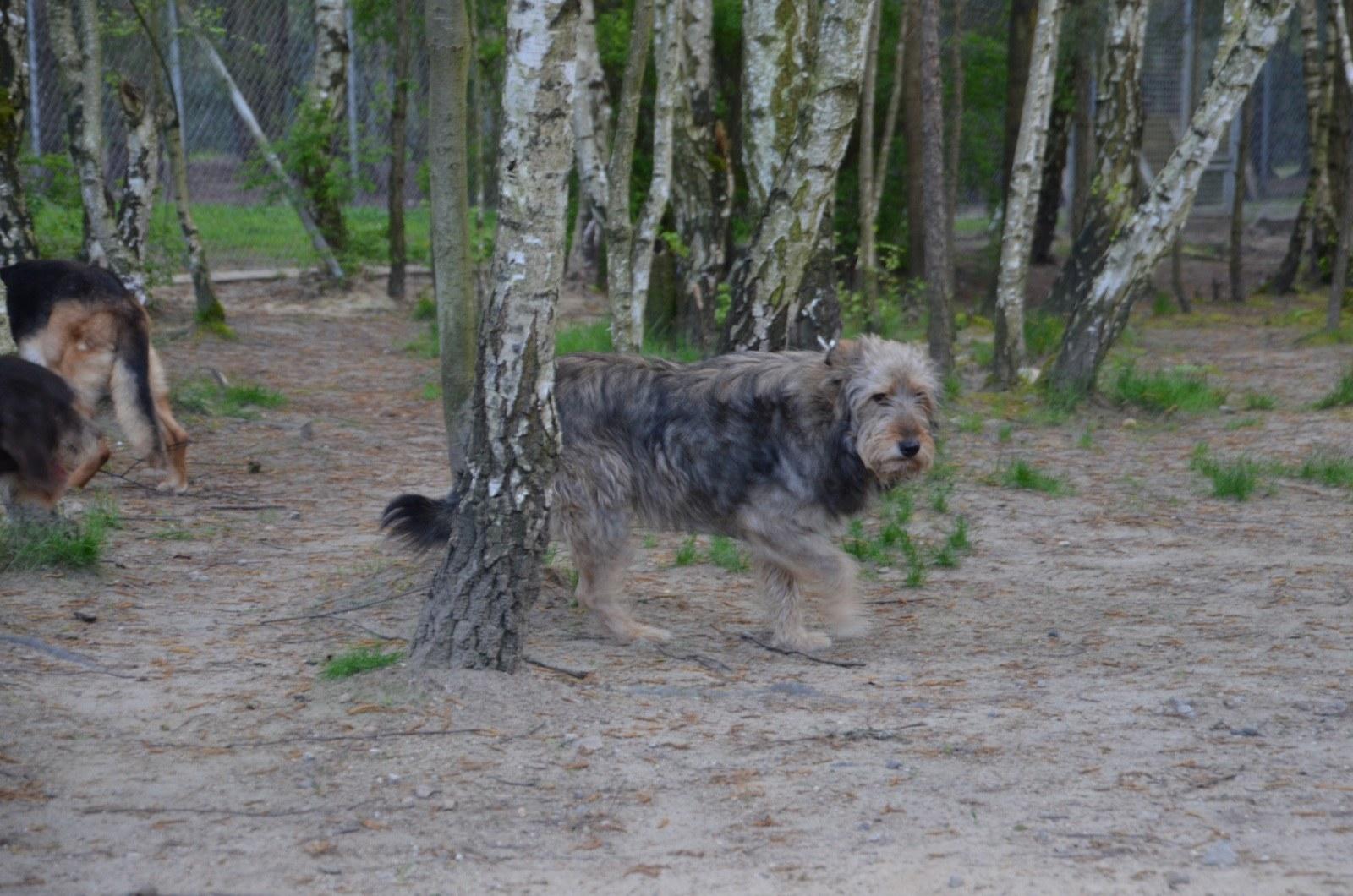 Pro Animale Hund Silver