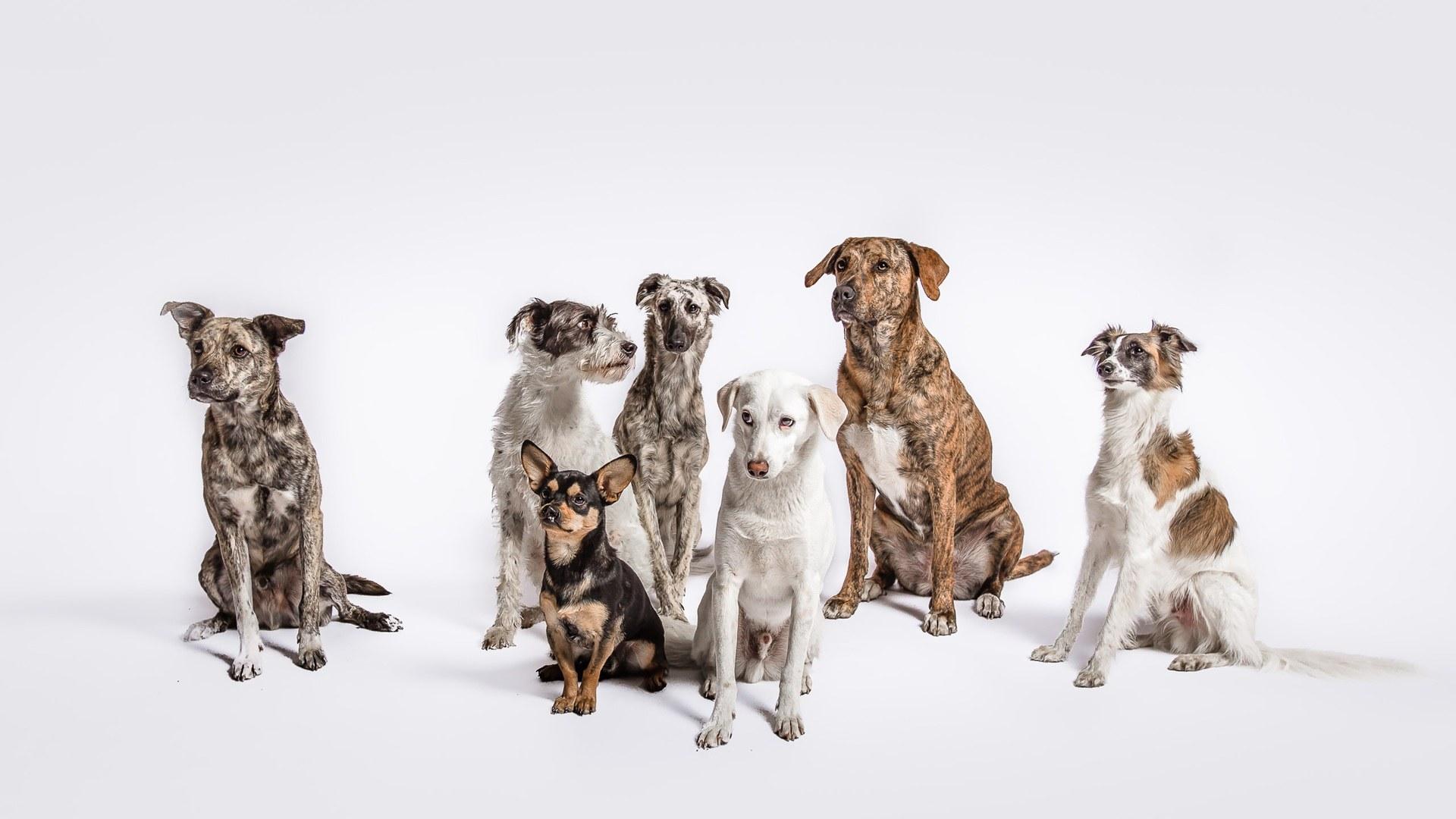 Cloud7 Büro Hunde