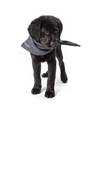 Schwarzer Welpe mit personalisiertem Hundehalstuch
