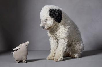 spanischer wasserhund mit cloud7 hundespielzeug piggy pink