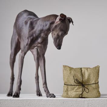 Hund bringt Weihnachtsgeschenk